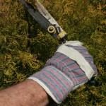 Gartenarbeit mit Gartenschere